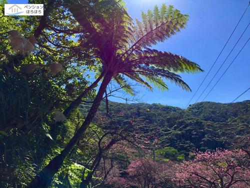 沖縄山々と緋寒桜